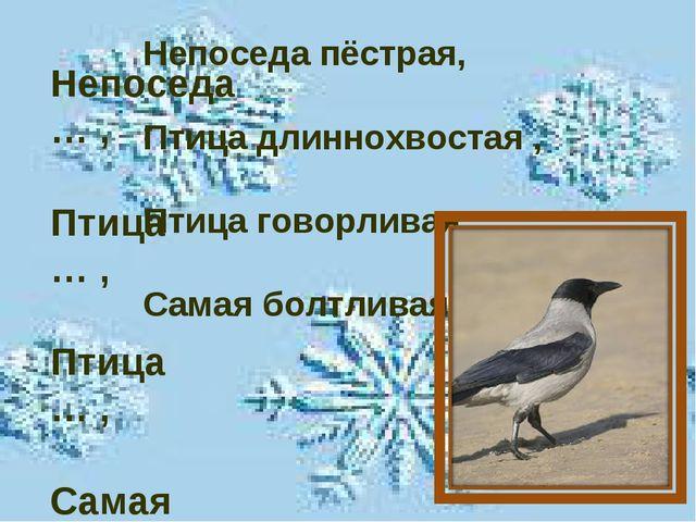 Непоседа … , Птица … , Птица … , Самая … . Непоседа пёстрая, Птица длиннохвос...
