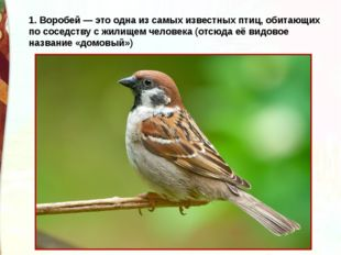 1. Воробей — это одна из самых известных птиц, обитающих по соседству с жилищ