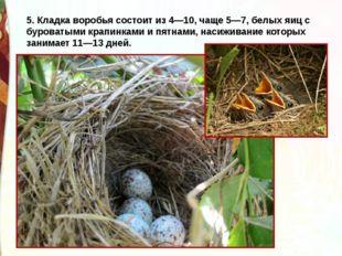 5. Кладка воробья состоит из 4—10, чаще 5—7, белых яиц с буроватыми крапинкам