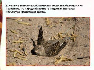 9. Купаясь в песке воробьи чистят перья и избавляются от паразитов. По народн