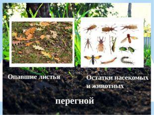 Опавшие листья Остатки насекомых и животных