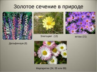 Золотое сечение в природе Дельфиниум (8) Златоцвет (13) астры (21) Маргаритки