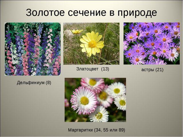 Золотое сечение в природе Дельфиниум (8) Златоцвет (13) астры (21) Маргаритки...