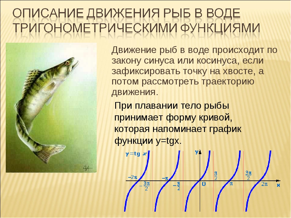 Движение рыб в воде происходит по закону синуса или косинуса, если зафиксиро...