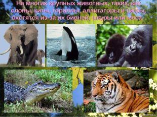 На многих крупных животных, таких, как слоны, киты, гориллы, аллигаторы и тиг