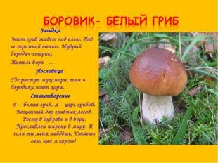 Загадка Этот гриб живет под елью, Под ее огромной тенью. Мудрый бородач-стари