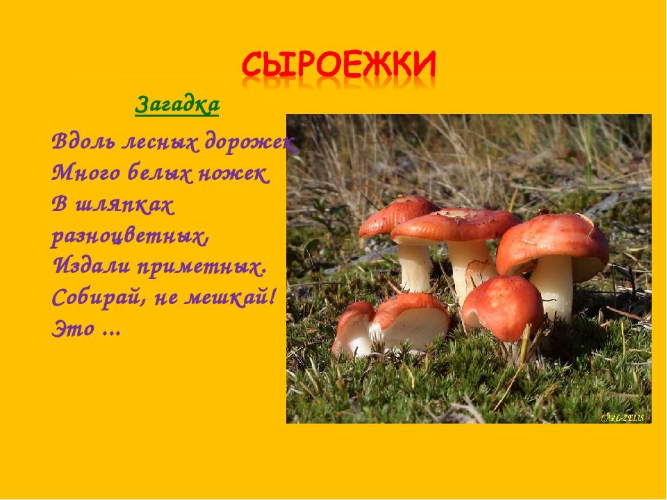 Загадка Вдоль лесных дорожек Много белых ножек В шляпках разноцветных, Издали...