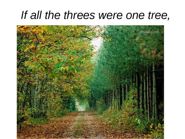 If all the threes were one tree,