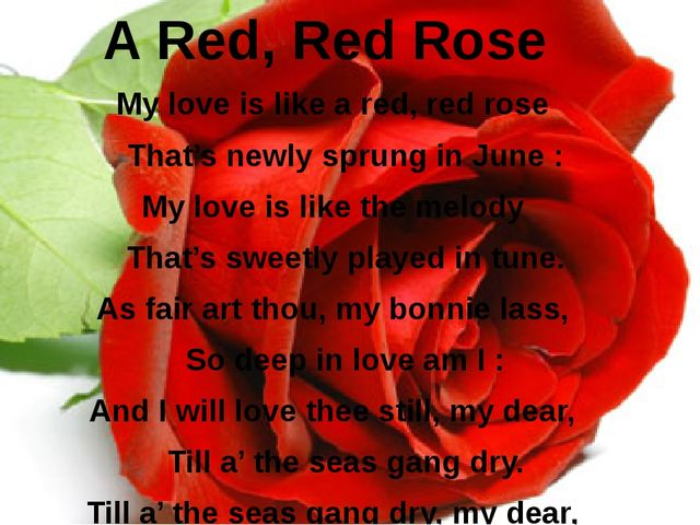 A Red, Red Rose My love is like a red, red rose  That's newly sprung in J...