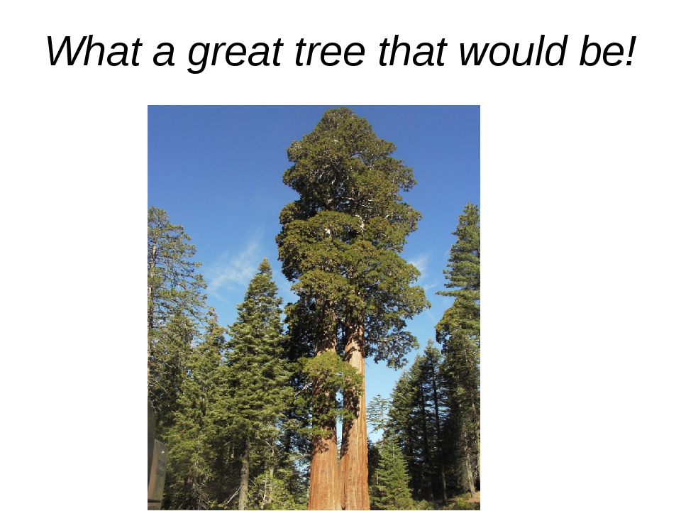 What a great tree that would be!