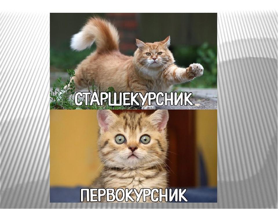 Смешные картинки о первокурсниках