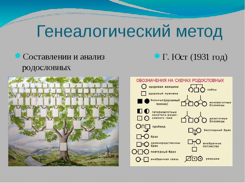 Генеалогический метод Составлении и анализ родословных Г. Юст (1931 год)