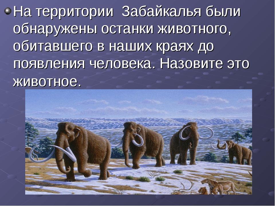 На территории Забайкалья были обнаружены останки животного, обитавшего в наши...