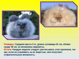 Размеры: Средняя масса 5 кг, длина туловища 61 см, обхват груди 38 см, но воз