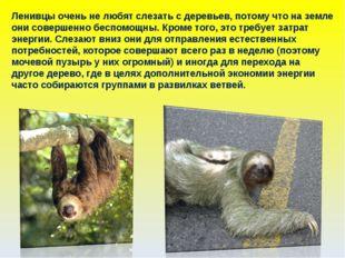 Ленивцы очень не любят слезать с деревьев, потому что на земле они совершенно