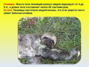 Размеры: Масса тела ленивцев разных видов варьирует от 4 до 9 кг, а длина тел
