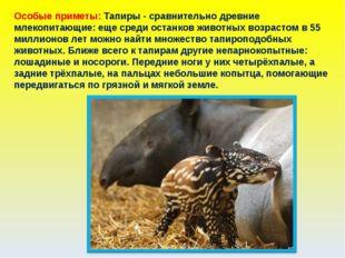 Особые приметы: Тапиры - сравнительно древние млекопитающие: еще среди останк