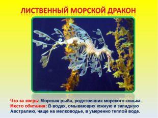 Что за зверь: Морская рыба, родственник морского конька. Место обитания: В во