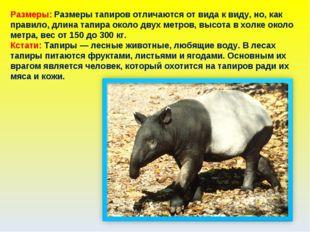 Размеры: Размеры тапиров отличаются от вида к виду, но, как правило, длина та