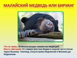Что за зверь: Млекопитающее семейства медведей. Место обитания: От северо-вос