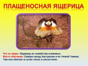 Что за зверь: Ящерица из семейства агамовых. Место обитания: Северо-запад Авс