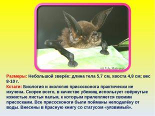 Размеры: Небольшой зверёк: длина тела 5,7 см, хвоста 4,8 см; вес 8-10 г. Кста