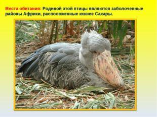 Места обитания: Родиной этой птицы являются заболоченные районы Африки, распо