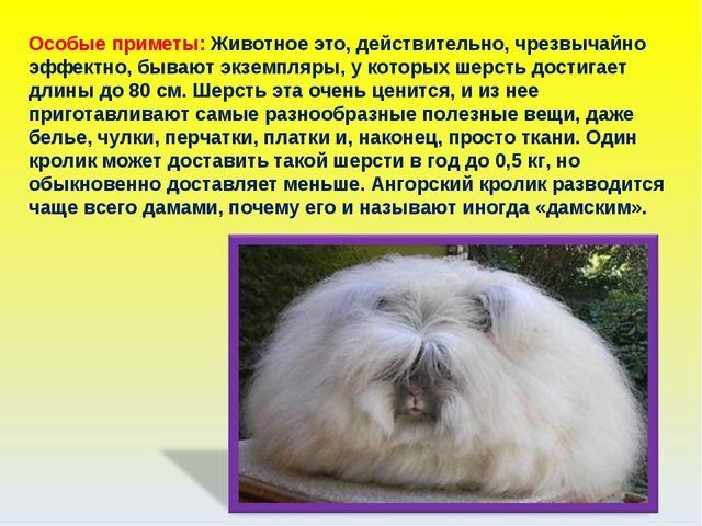 Особые приметы: Животное это, действительно, чрезвычайно эффектно, бывают экз...