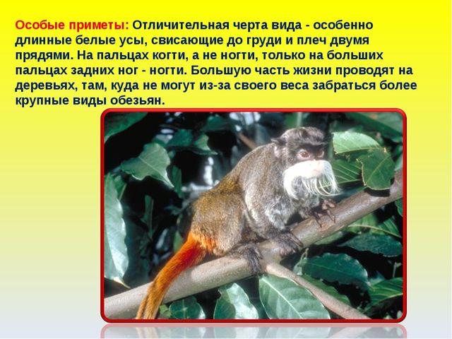 Особые приметы: Отличительная черта вида - особенно длинные белые усы, свисаю...