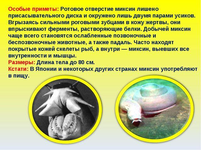 Особые приметы: Ротовое отверстие миксин лишено присасывательного диска и окр...