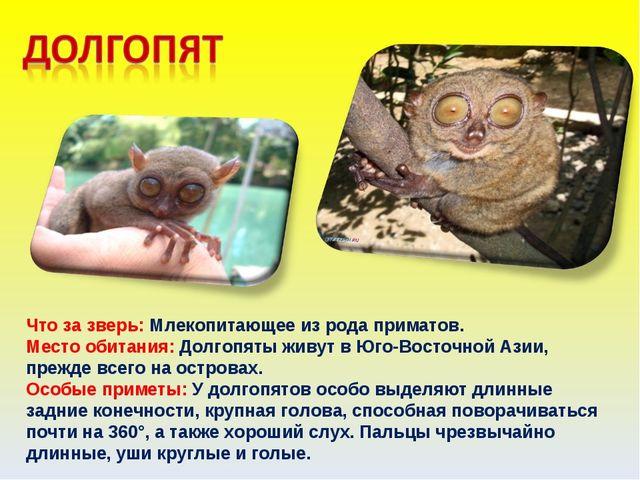Что за зверь: Млекопитающее из рода приматов. Место обитания: Долгопяты живут...
