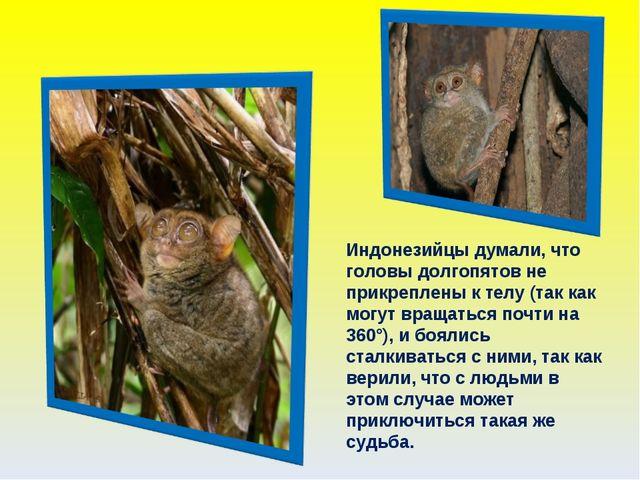 Индонезийцы думали, что головы долгопятов не прикреплены к телу (так как могу...