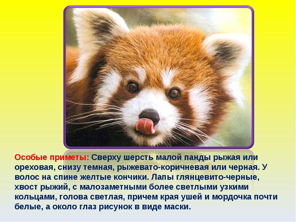 Особые приметы: Сверху шерсть малой панды рыжая или ореховая, снизу темная, р...