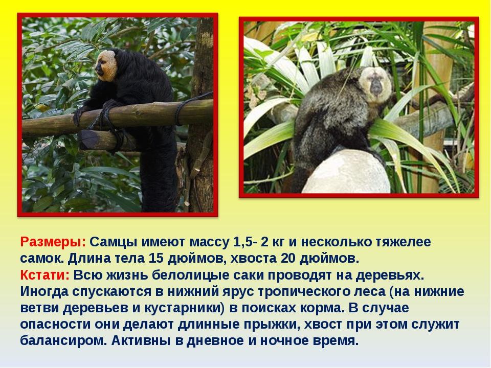 Размеры: Самцы имеют массу 1,5- 2 кг и несколько тяжелее самок. Длина тела 15...