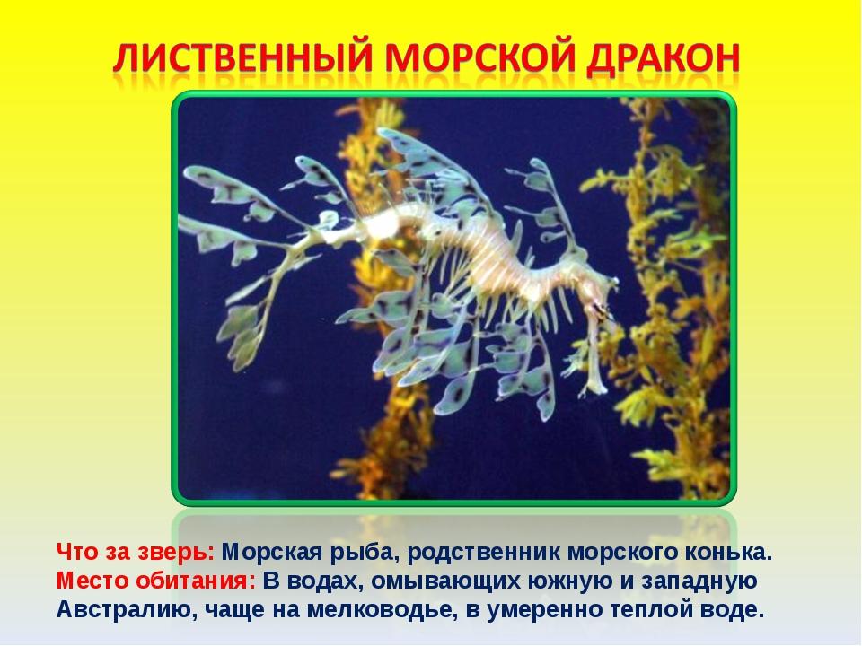 Что за зверь: Морская рыба, родственник морского конька. Место обитания: В во...