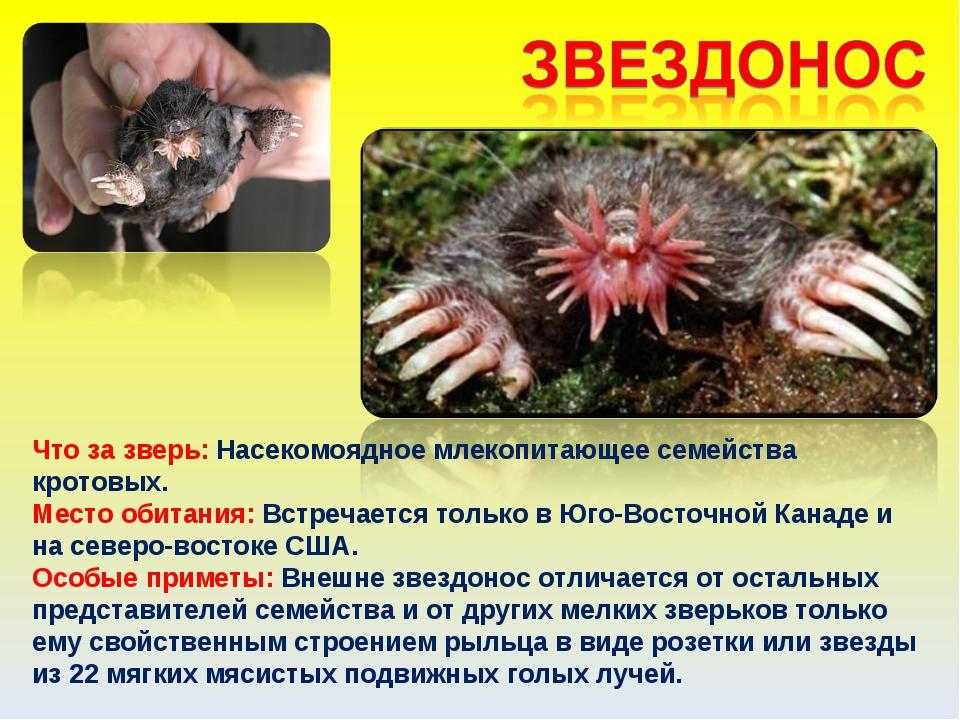 Что за зверь: Насекомоядное млекопитающее семейства кротовых. Место обитания:...