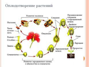 Оплодотворение растений