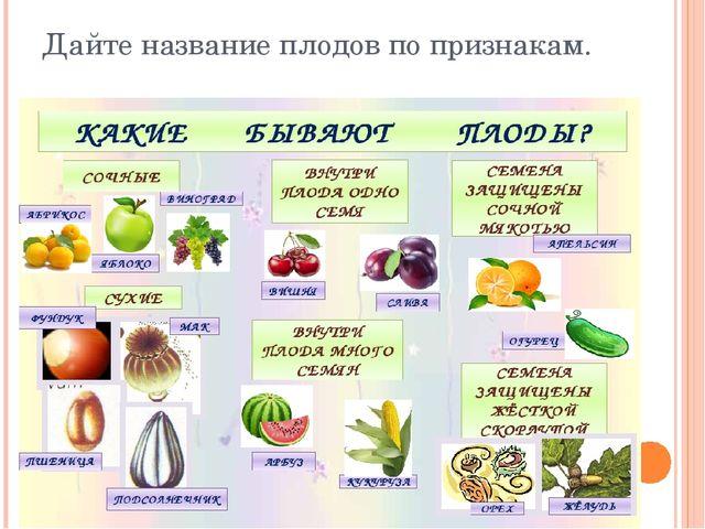 Дайте название плодов по признакам.