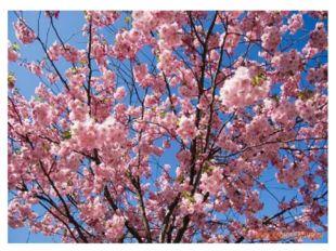 Японские пословицы: *Прощай другим, но не прощай себе. *Ущипни себя и узнаеш