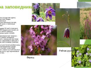 Флора заповедника В тесном соседстве здесь произрастают виды свойственные шир