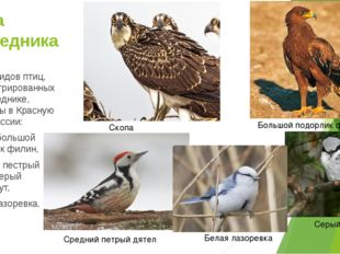 Фауна заповедника Шесть видов птиц, зарегистрированных в заповеднике, занесен
