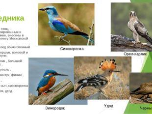 Фауна заповедника 26 видов птиц, зарегистрированных в заповеднике, внесены в