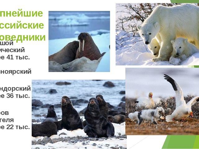 Крупнейшие российские заповедники Большой Арктический (более 41 тыс. км²) (Кр...