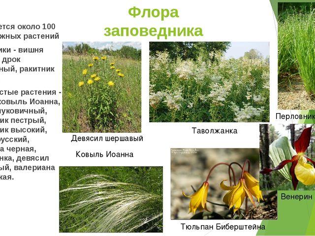 Флора заповедника Встречается около 100 видов южных растений Кустарники - виш...