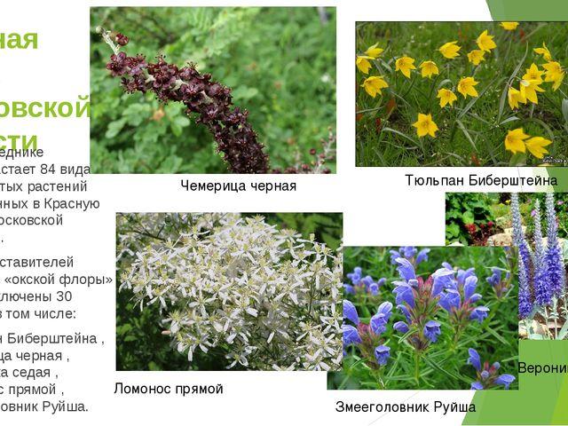 Красная книга Московской области В заповеднике произрастает 84 вида сосудисты...