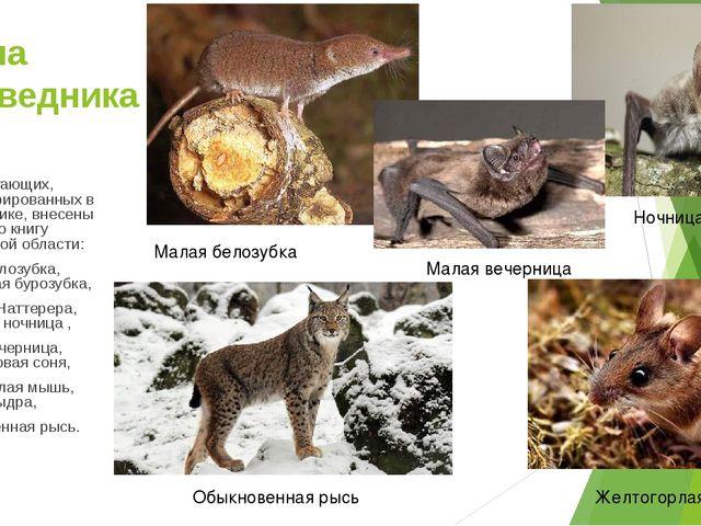 Фауна заповедника 9 видов млекопитающих, зарегистрированных в заповеднике, вн...