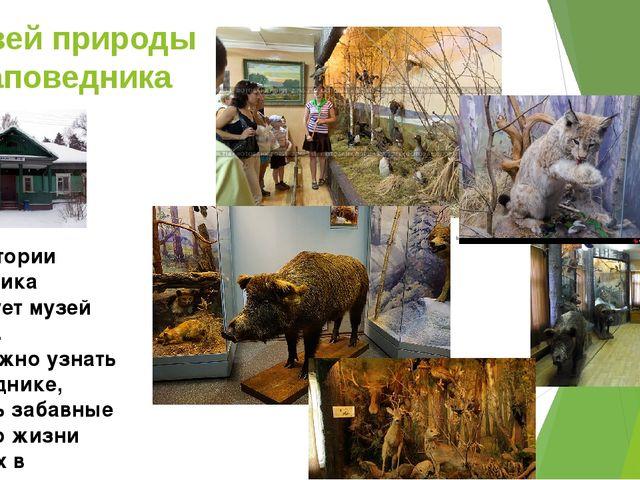 Музей природы заповедника На территории заповедника существует музей природы....