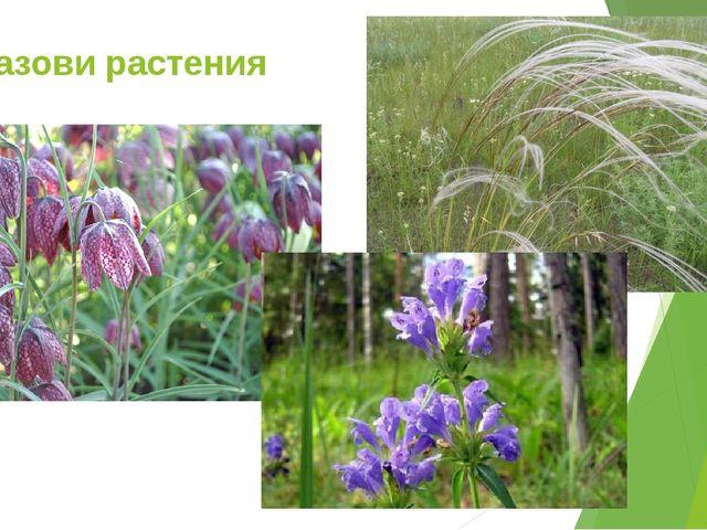 Назови растения