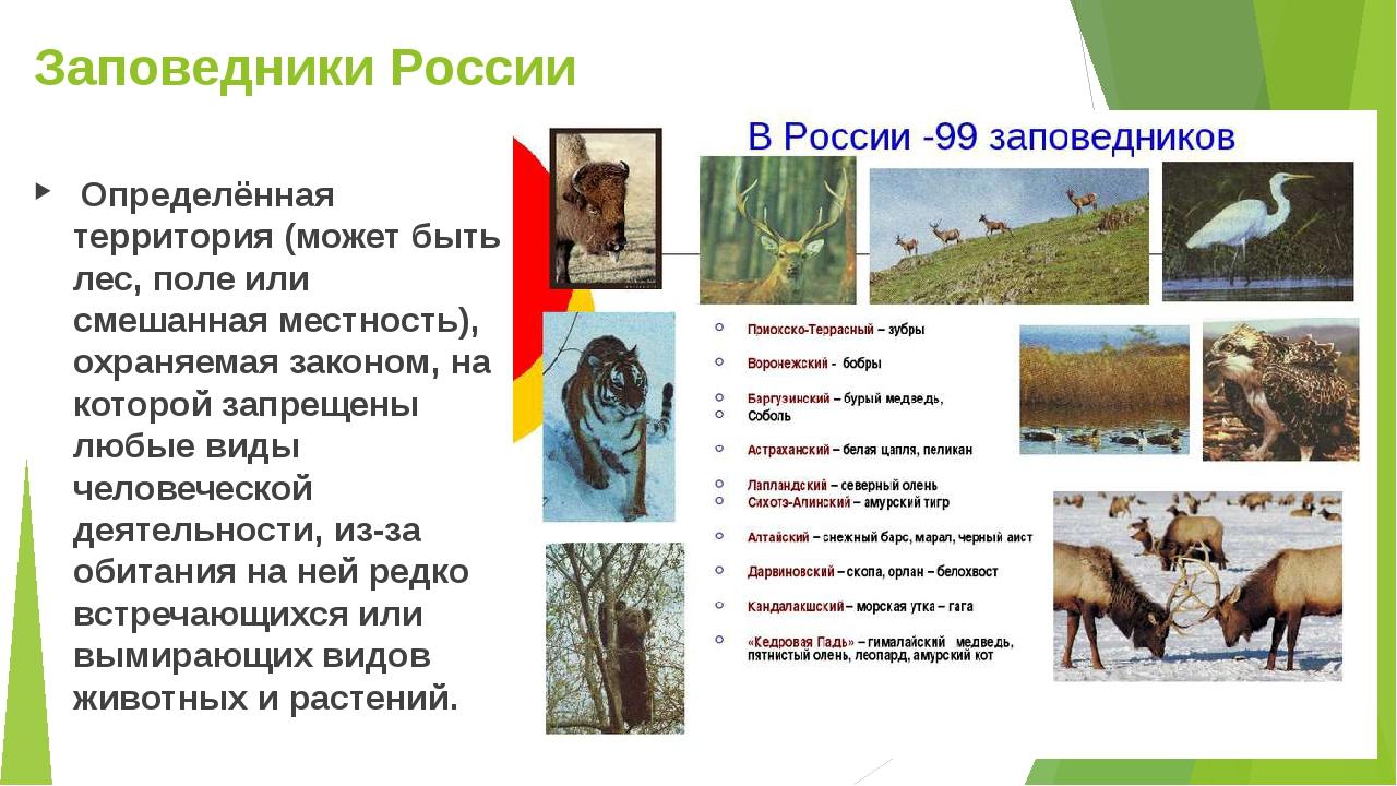 Заповедники России Определённая территория (может быть лес, поле или смешанна...