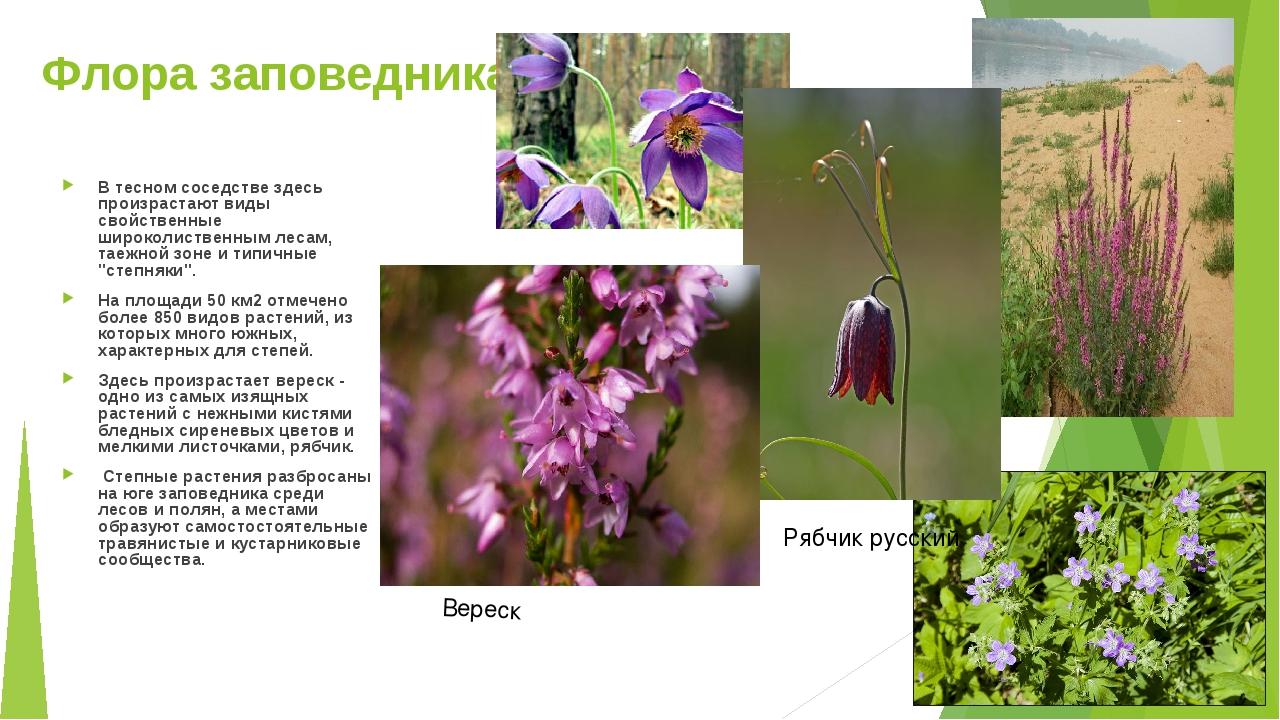 Флора заповедника В тесном соседстве здесь произрастают виды свойственные шир...